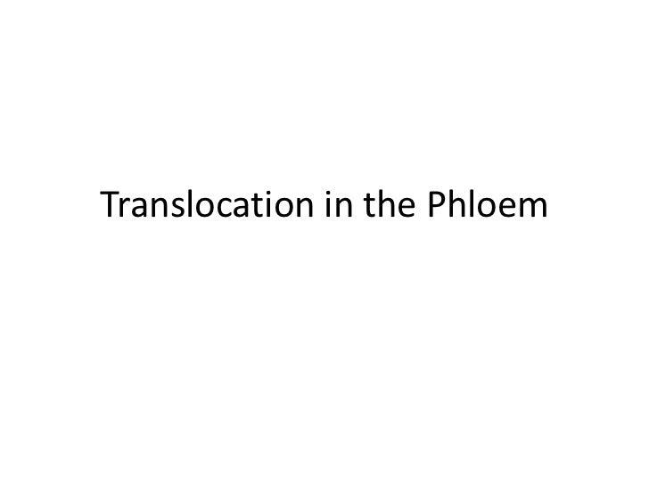 Translocation in the Phloem