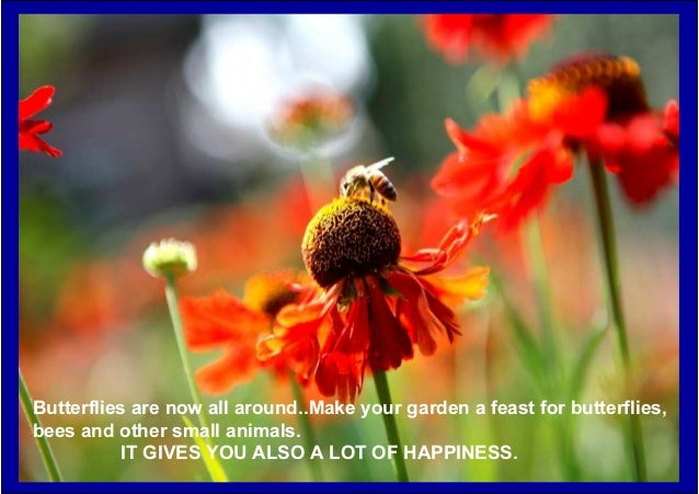 Butterflies are now all around..Make your garden a feast for butterflies, bees and other small animals. IT GIVES YOU ALSO ...