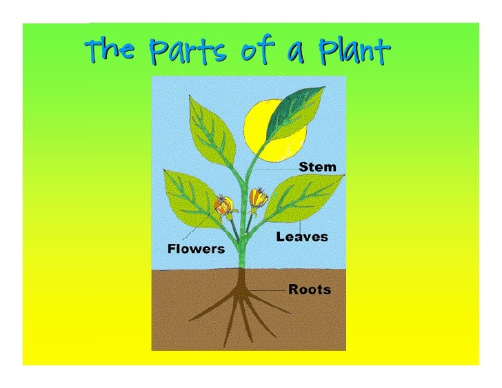 Parts of a plant | k5 computer lab technology lessons.