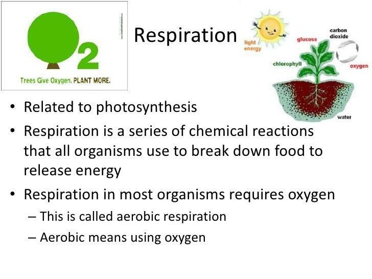 Plant processes respiration