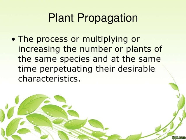 Asexual propagation meaning in english