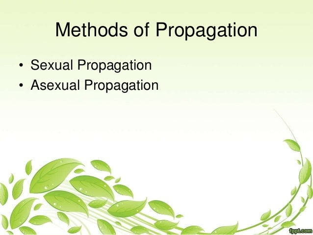 Asexual plant propagation method