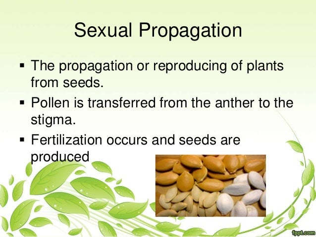 plant propergation Find and save ideas about plant propagation on pinterest | see more ideas about propogating aloe vera, propogating plants and propagate aloe vera.