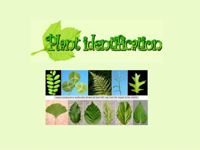 Learning to recognise plants It is important to be able to recognise the plants that are used in agriculture. • If the pla...