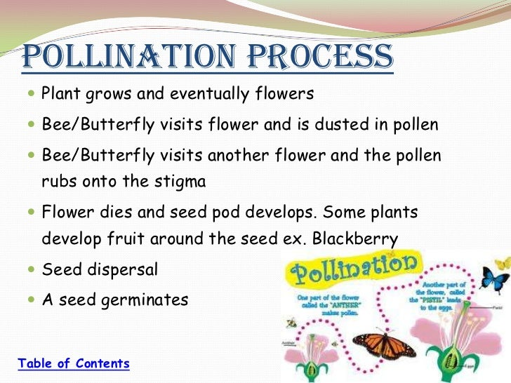Plant Reproduction – Plant Reproduction Worksheet