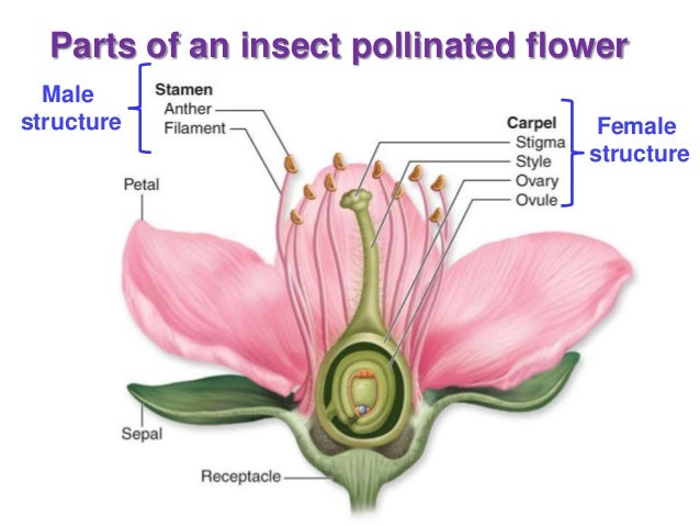 Image result for plant reproduction