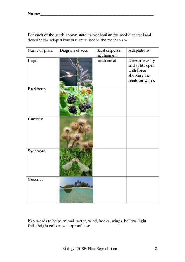 Plant reproduction worksheet – Seed Dispersal Worksheet