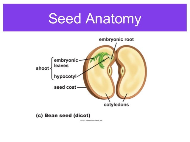 Plant reproduction (1)