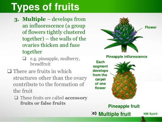 plant reproduction development