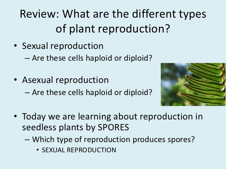 Sexual reproduction in plants spores