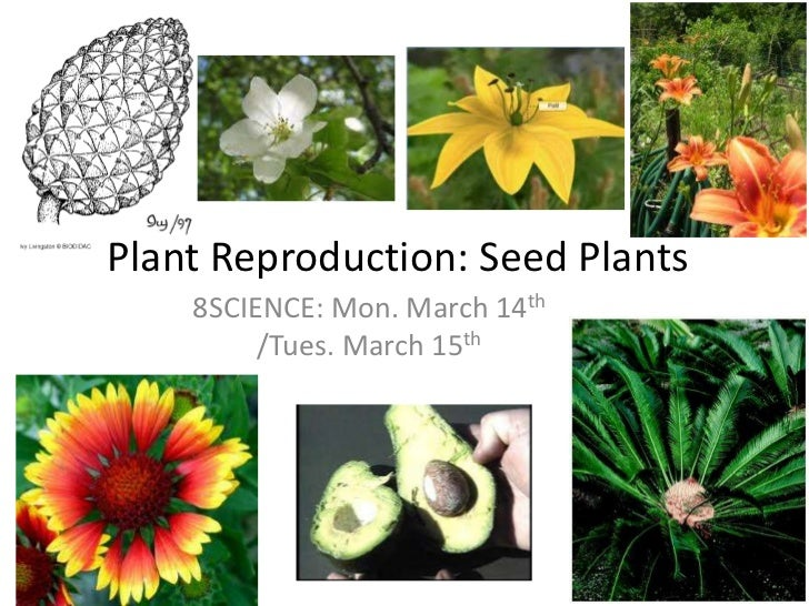 Plant Reproduction: Seed Plants<br />8SCIENCE: Mon. March 14th/Tues. March 15th<br />