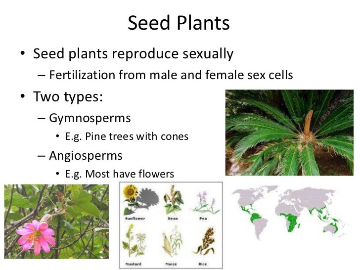 plant reproduction seed plants
