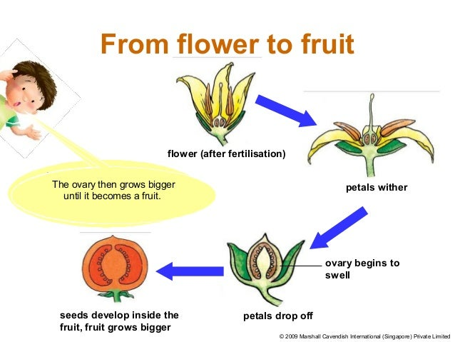 Plant Reproduction With Qn