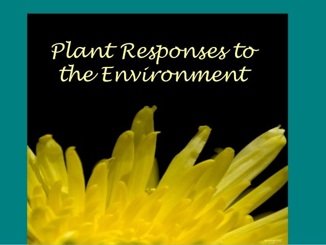 Plant Responses to the Environment
