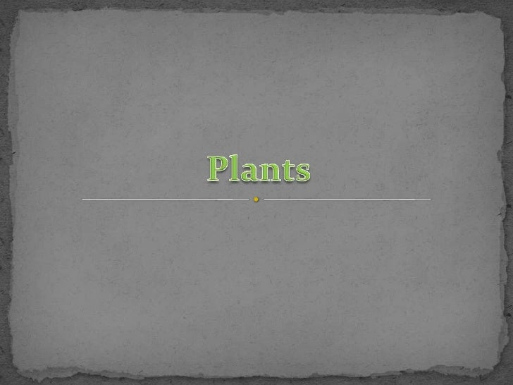 Plants <br />