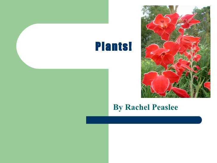 Plants! By Rachel Peaslee