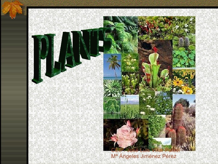 PLANTS CEIP. José Luis Villar Palasí Mª Ángeles Jiménez Pérez