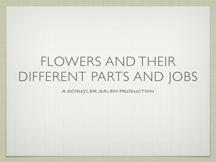 FLOWERS AND THEIR DIFFERENT PARTS AND JOBS      A SCHUYLER SALEM PRODUCTION