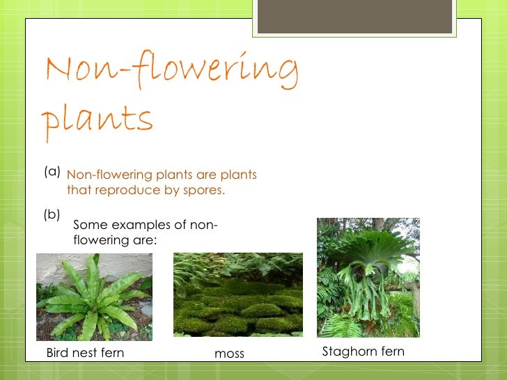 Non flowering plants list names