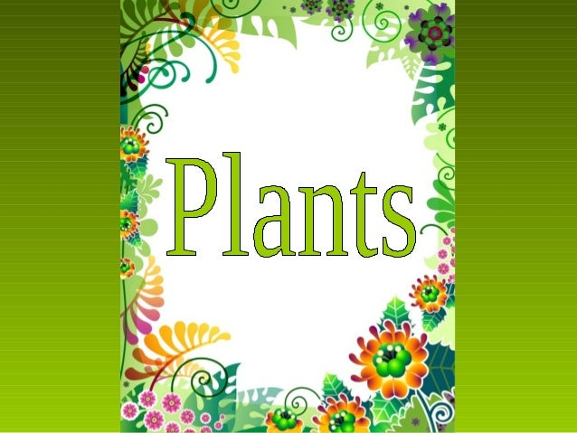 Parts of a          plantRoots        absorb water and minerals from the soil.Stem              carries the water and the ...