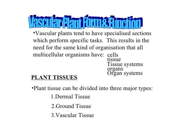 PLANT TISSUES <ul><li>Plant tissue can be divided into three major types: </li></ul><ul><li>Vascular plants tend to have s...