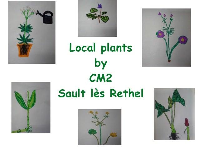 Local plants by CM2 Sault lès Rethel