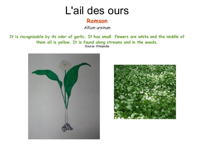 Plants Slide 3