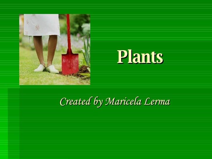 Plants Created by Maricela Lerma