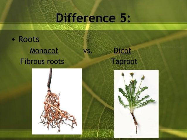 Plants distributing materials + monocots - dicots 10 Examples Of Monocot Plants