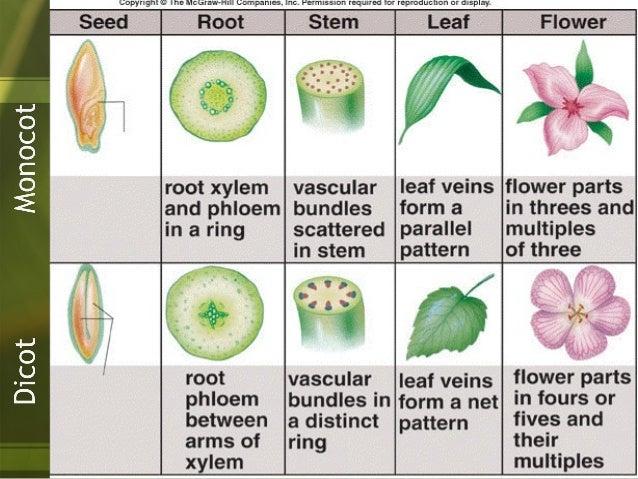 Plants Distributing Materials Monocots Dicots