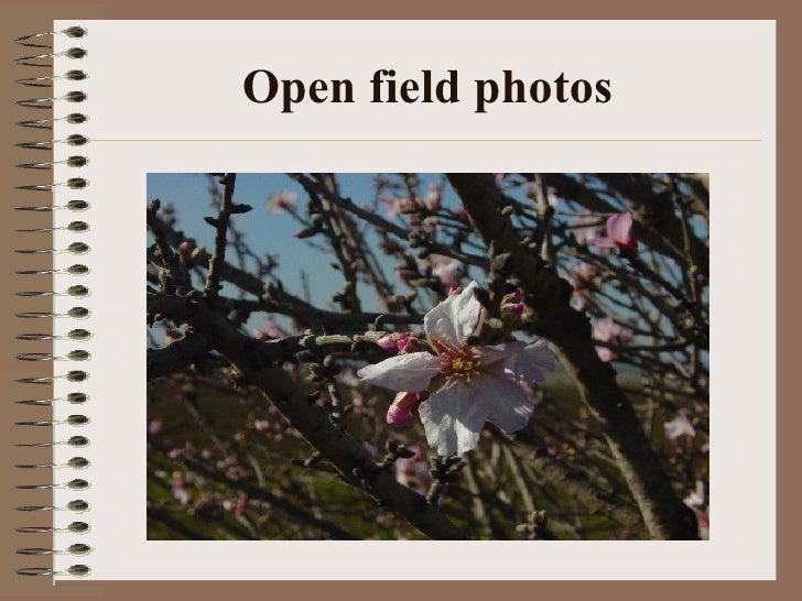 Open field photos