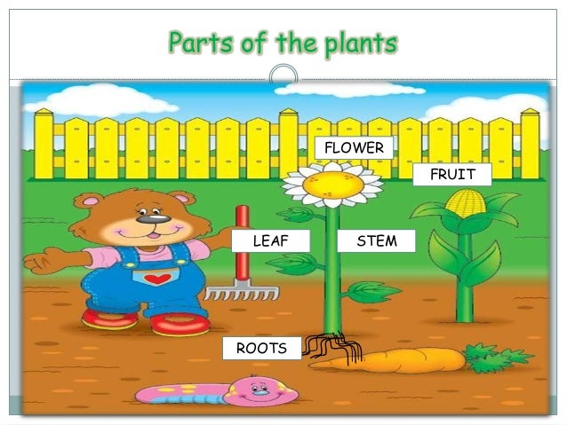 Parts Of The Plants And Needs For Kids