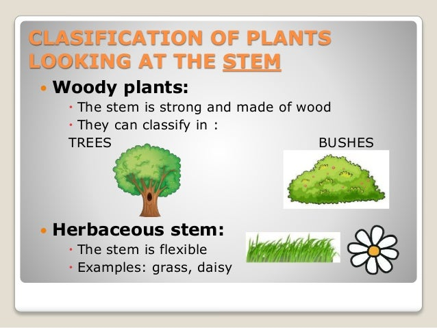Plants Parts Types And Nutrition
