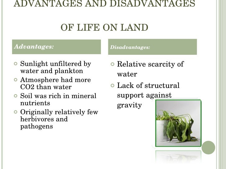 Village Life: Advantages and Disadvantages of Village Life