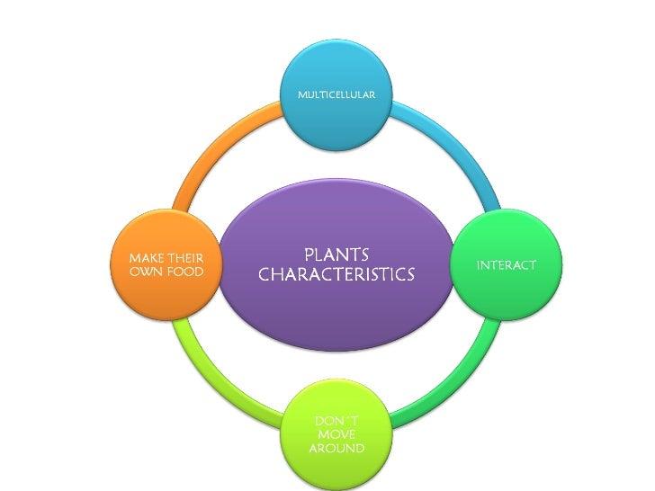 Plants queta Slide 2