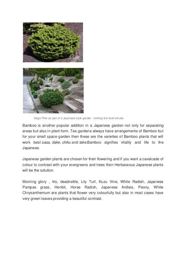 3 Mugo Pine As Part Of A Japanese Style Garden