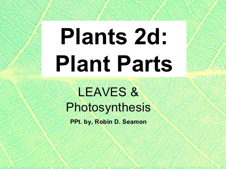 Plants 2d: Plant Parts PPt. by, Robin D. Seamon LEAVES & Photosynthesis