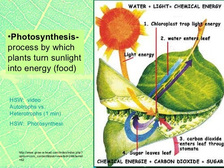 Plants2 plant parts leaves; photosynthesis, stomata respiration & tra…