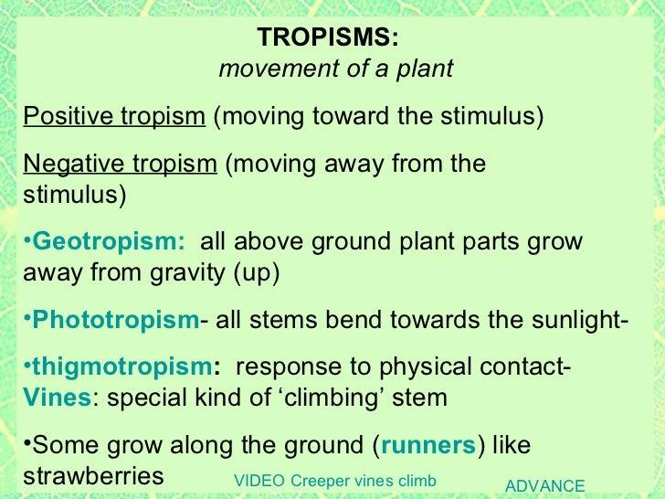 Plants2 plant parts roots & stems, specialized roots, tropisms, incl ...