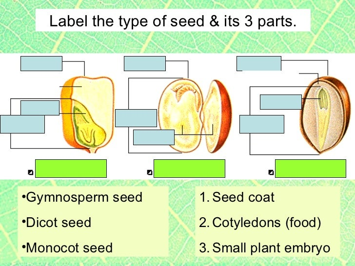 Plants2 Plant Parts Seeds 11816607 on Parts Of A Seed Worksheet