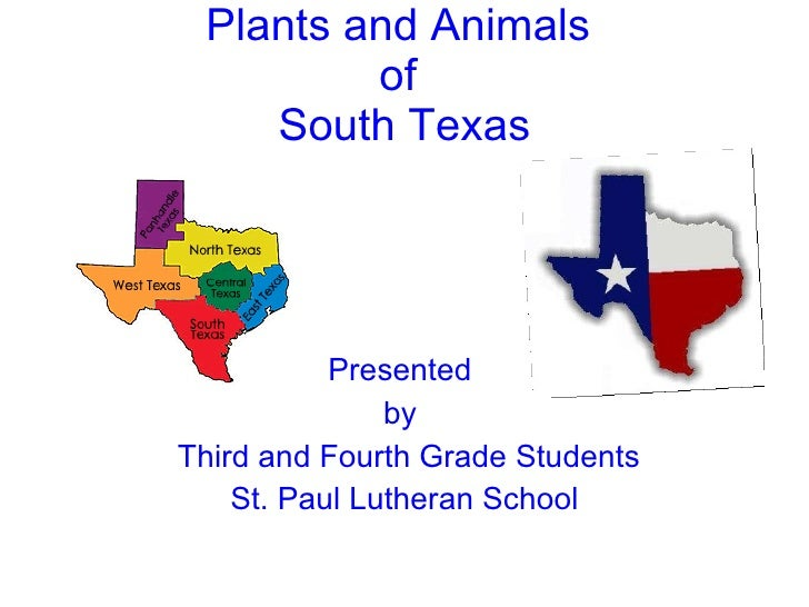Plants and Animals  of  South Texas <ul><li>Presented  </li></ul><ul><li>by  </li></ul><ul><li>Third and Fourth Grade Stud...
