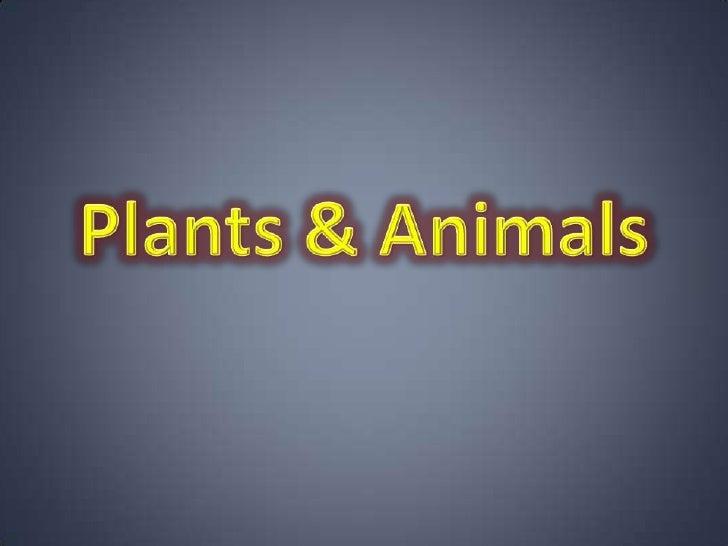 Plants & Animals<br />