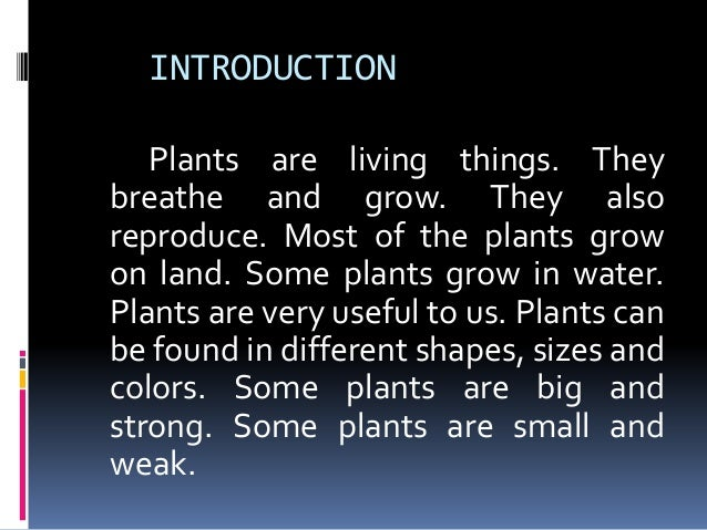 How Plants Are Useful To Us All About Plants