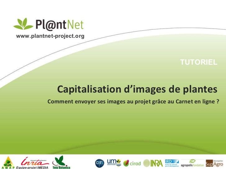 Capitalisation d'images de plantes Equipe-projet IMEDIA www.plantnet-project.org   Comment envoyer ses images au projet gr...