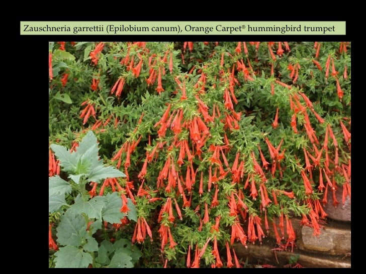The Easiest To Grow Longest Blooming Durable Plants For