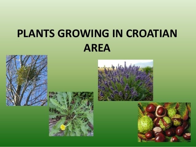PLANTS GROWING IN CROATIAN AREA