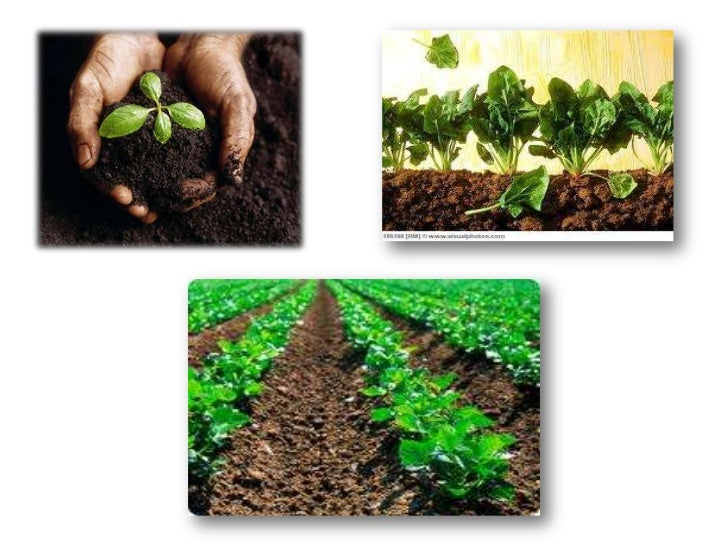 Plant's habitat