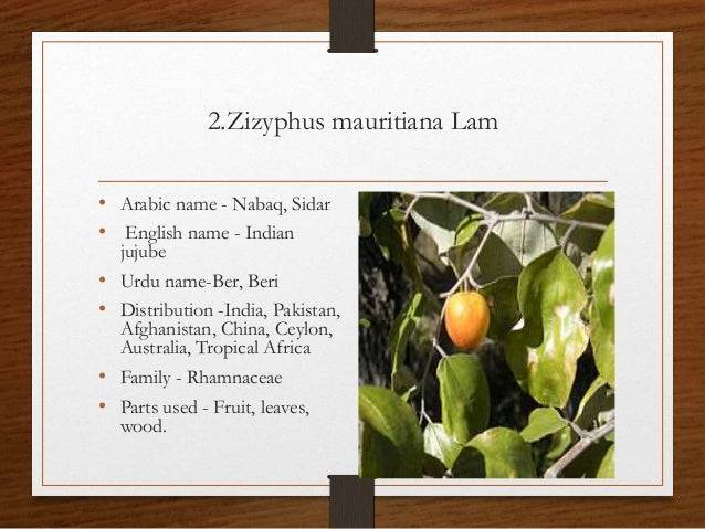 ziziphus mauritiana chemical structure and uses Chemical names: orange shellac  ber (ziziphus mauritiana),  the molecular structure of the ingredients was analyzed and.