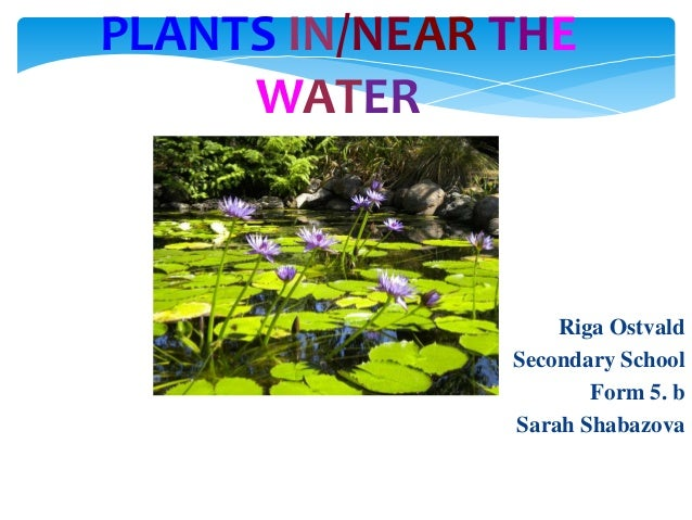 PLANTS IN/NEAR THE WATER  Riga Ostvald Secondary School Form 5. b Sarah Shabazova