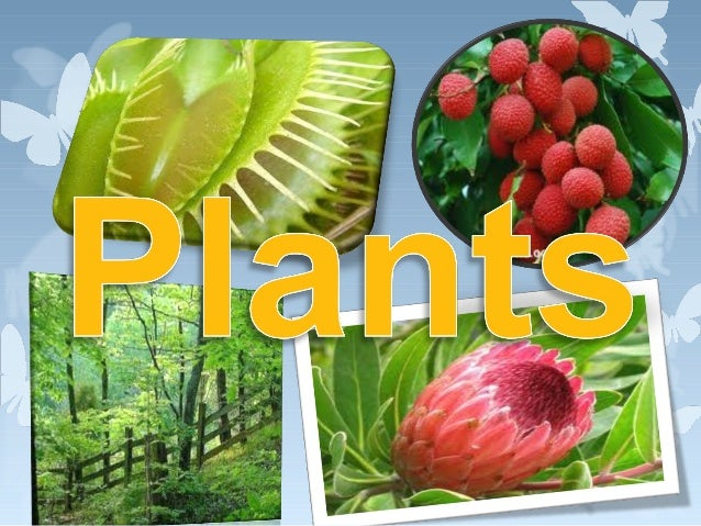 Plants•Plants are everywhere. However how well do we knowthem? Firstly, how do they different from animals and us?Yes, the...
